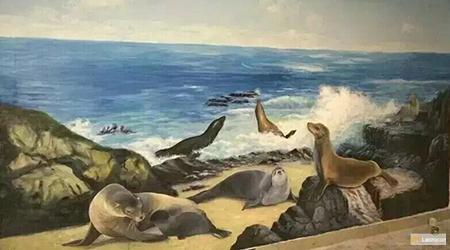 sea life sea lion